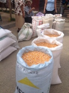 corn to grind for tortillas